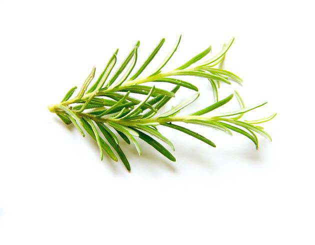 Rosemary benefits